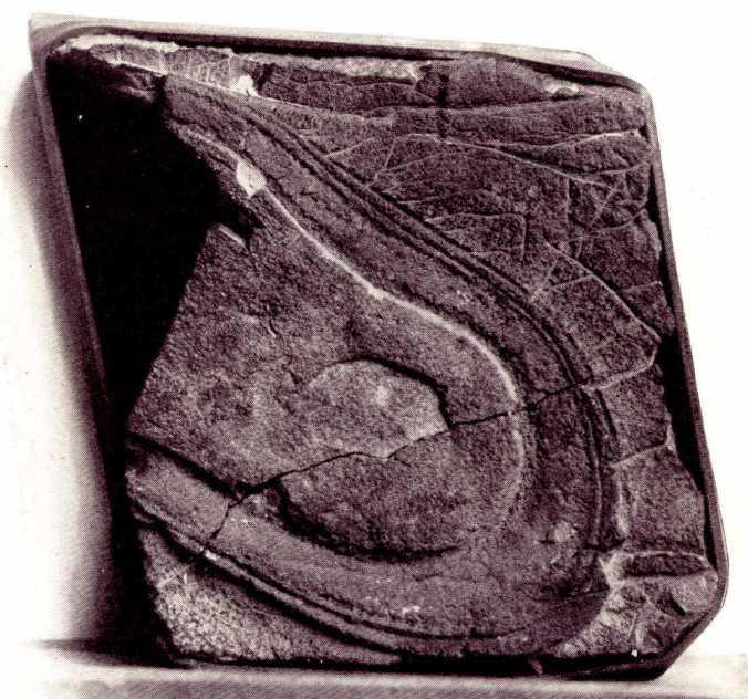200-million-year-old-fossilized-shoeprint