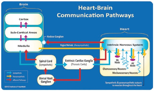 heart-brain-comm-paths