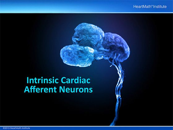 heart-neuron-slide-5